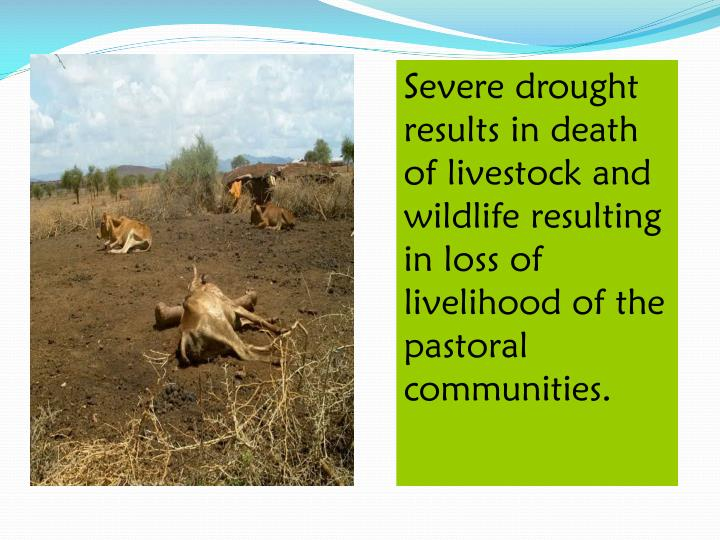 Severe drought results in death of livestock and wildlife resulting in loss of livelihood of the pastoral communities.