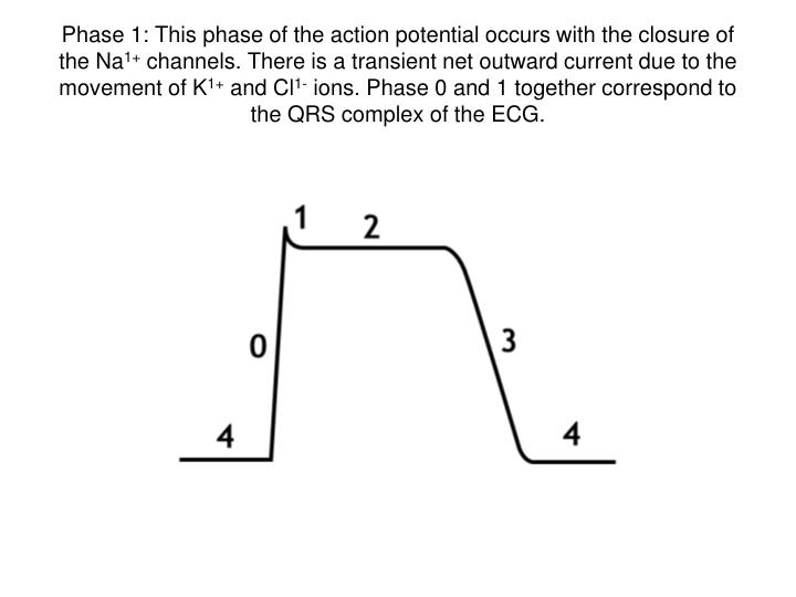 Phase 1: This phase of the action potential occurs with the closure of the Na