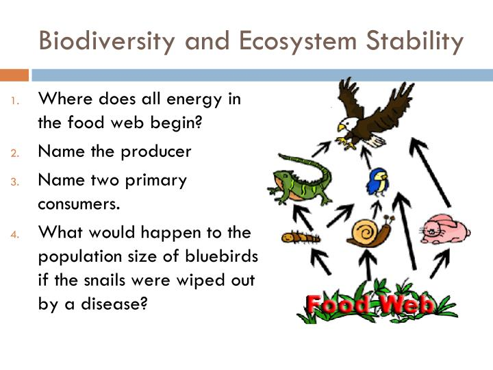 biodiversity and ecosystem stability n.