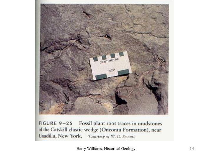 Harry Williams, Historical Geology