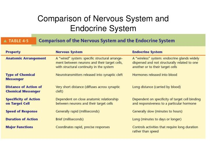 Comparison of Nervous System and Endocrine System