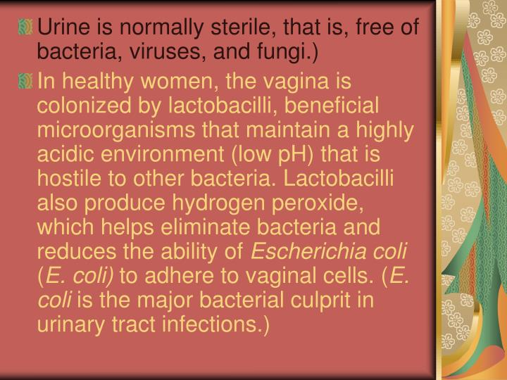 Urine is normally sterile, that is, free of bacteria, viruses, and fungi.)