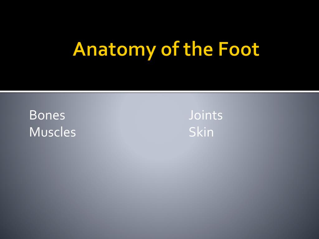 Ppt Anatomy Of The Foot Powerpoint Presentation Id3033596