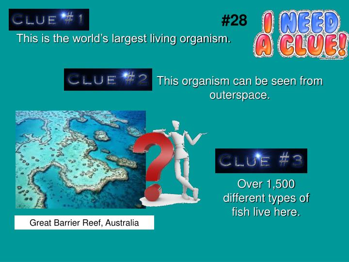 This is the world's largest living organism.
