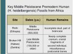 key middle pleistocene premodern human h heidelbergensis fossils from africa