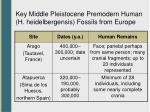 key middle pleistocene premodern human h heidelbergensis fossils from europe