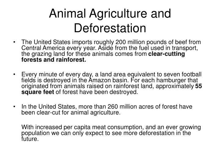 Animal Agriculture and Deforestation