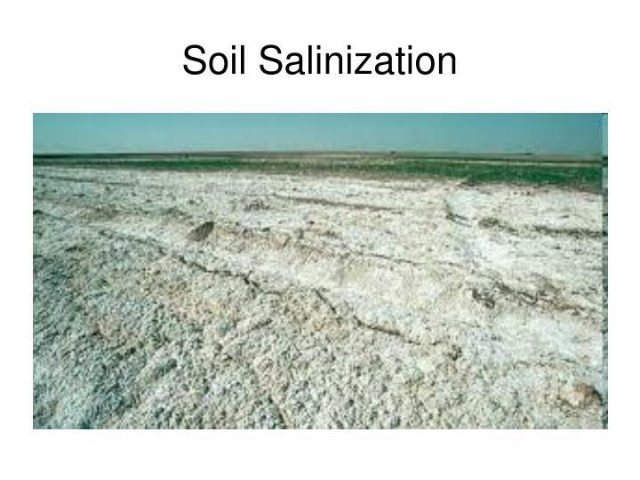 Soil Salinization