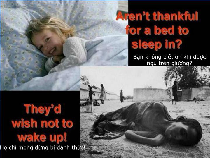 Bạn không biết ơn khi được ngủ trên giường?