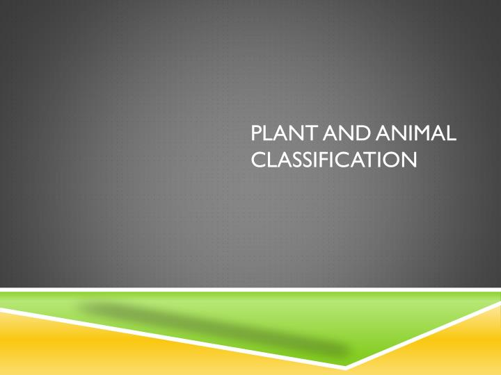 plant and animal classification n.