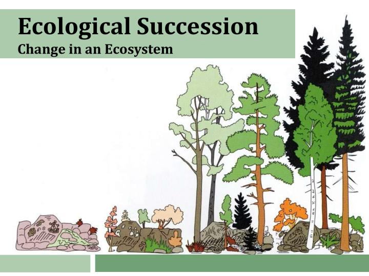 ecological succession change in an ecosystem n.