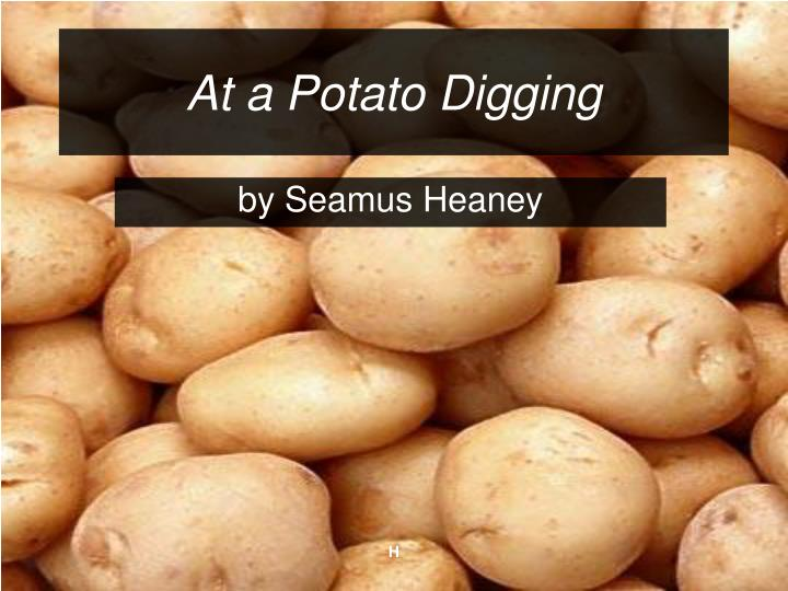 digging potato and father His father dug potato drills and flowerbeds, his grandpa used to dig peat, and he is digging up the past because of this, the title is very fitting throughout the poem seamus heaney uses shifts in the tense to convey his memories as well as his determination for the future.