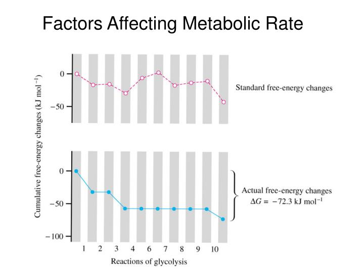 Factors Affecting Metabolic Rate