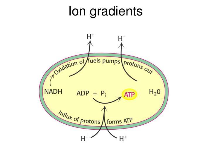 Ion gradients