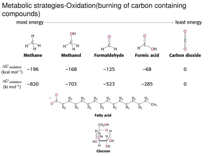 Metabolic strategies-Oxidation(burning of carbon containing compounds)