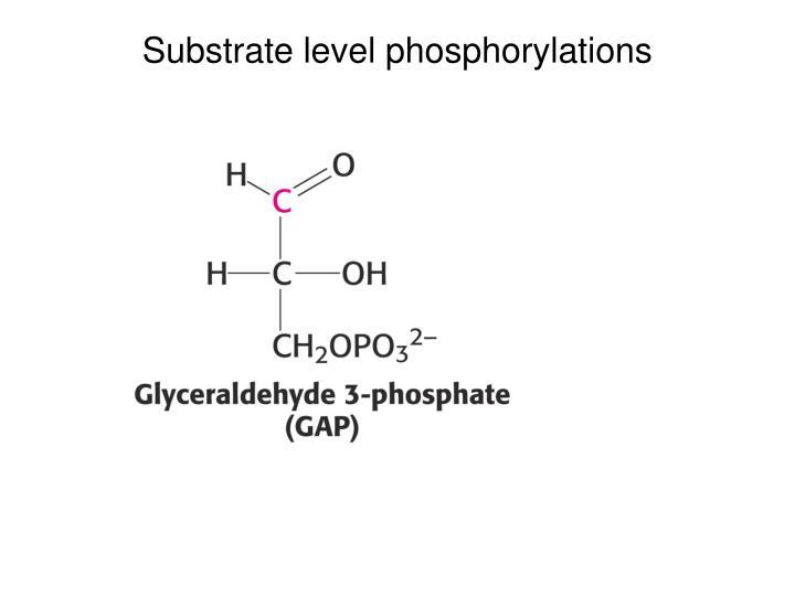Substrate level phosphorylations