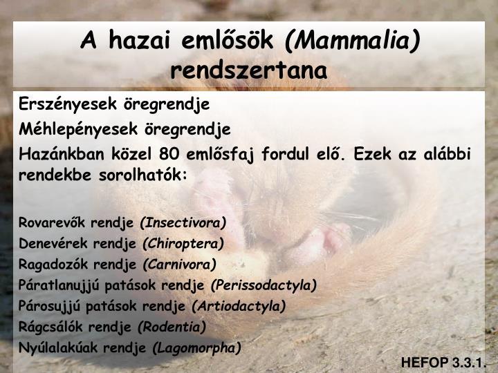 A hazai emlősök