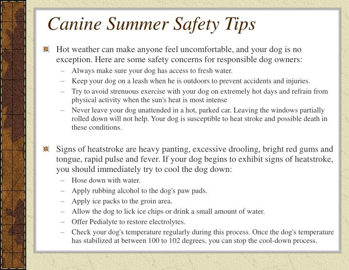 Canine summer safety tips1