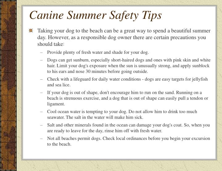 Canine summer safety tips2