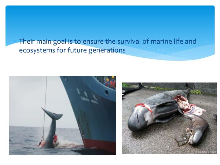 Their main goal is to ensure the survival of marine life and ecosystems for future generations