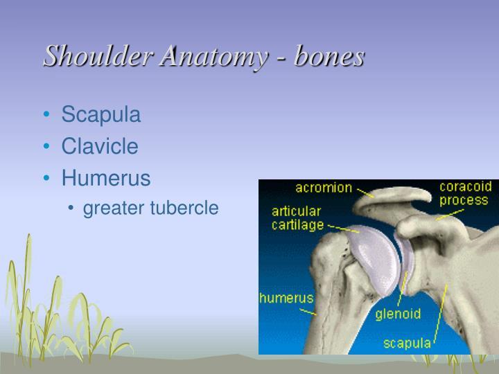 Ppt Shoulder Anatomy Powerpoint Presentation Id3040115
