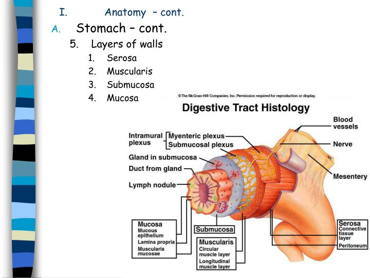 Ppt Peptic Ulcer Disease Powerpoint Presentation Id3041047