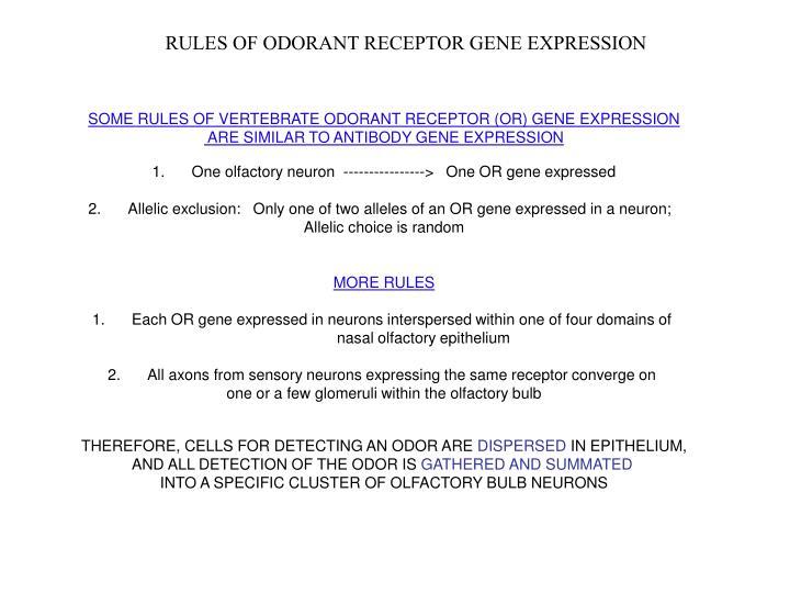 RULES OF ODORANT RECEPTOR GENE EXPRESSION
