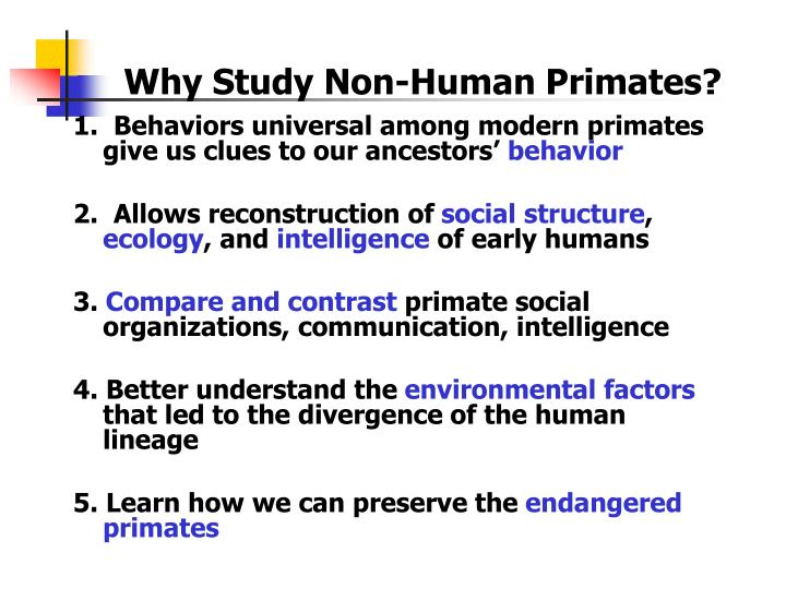 do non human primates have culture Do non human primate species have culture ex of japanese macaque monkey new from anth 1001 at lsu.