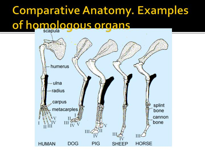 PPT - Evidence for Evolution. PowerPoint Presentation - ID:3042823