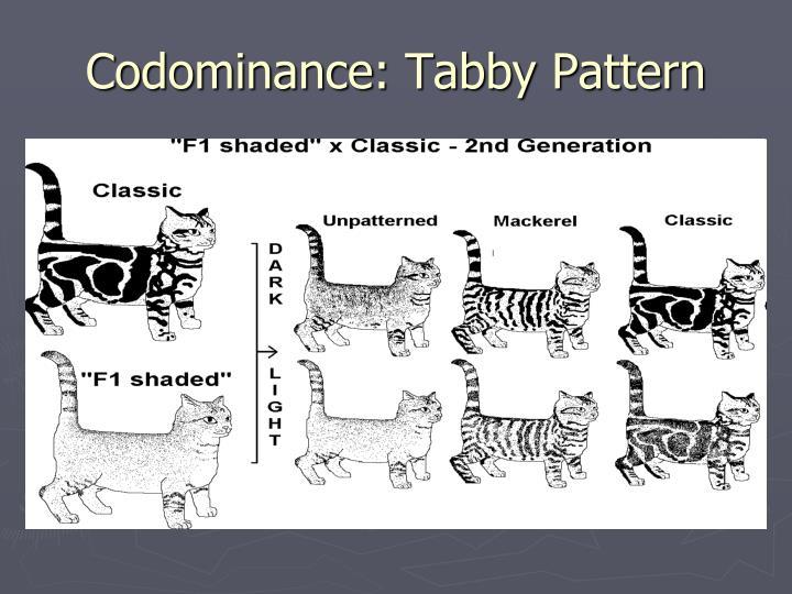 Codominance: Tabby Pattern