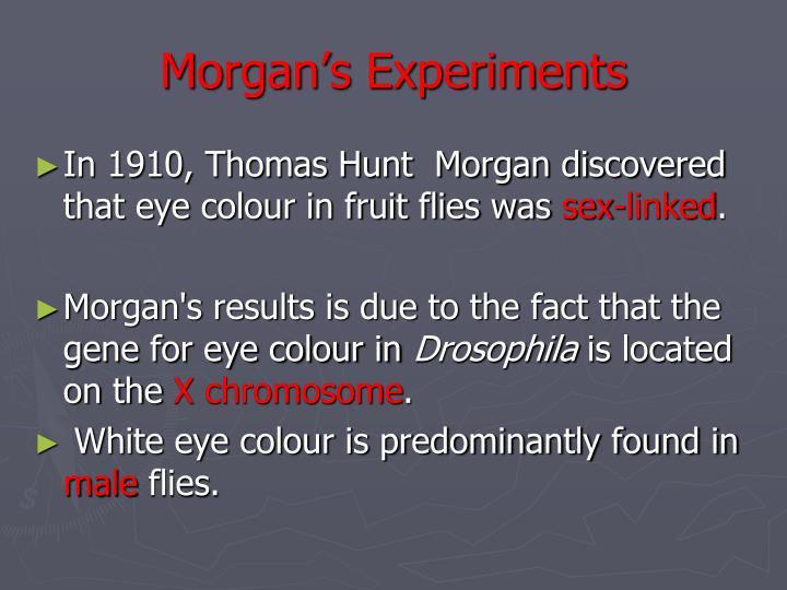 Morgan's Experiments