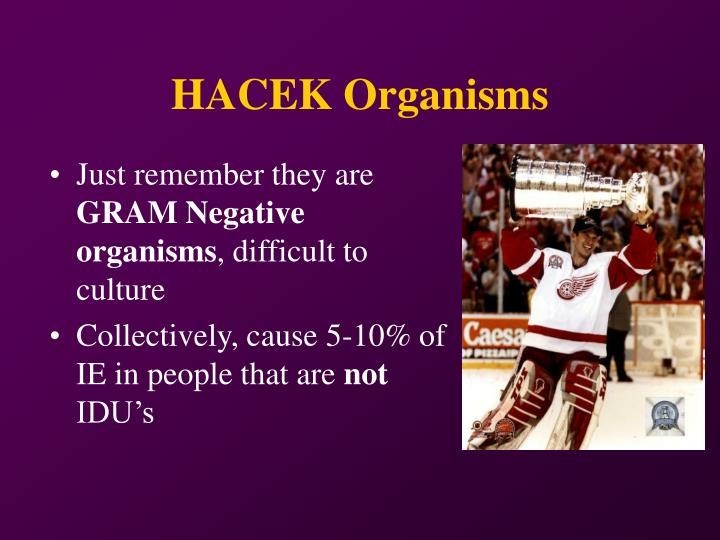 HACEK Organisms