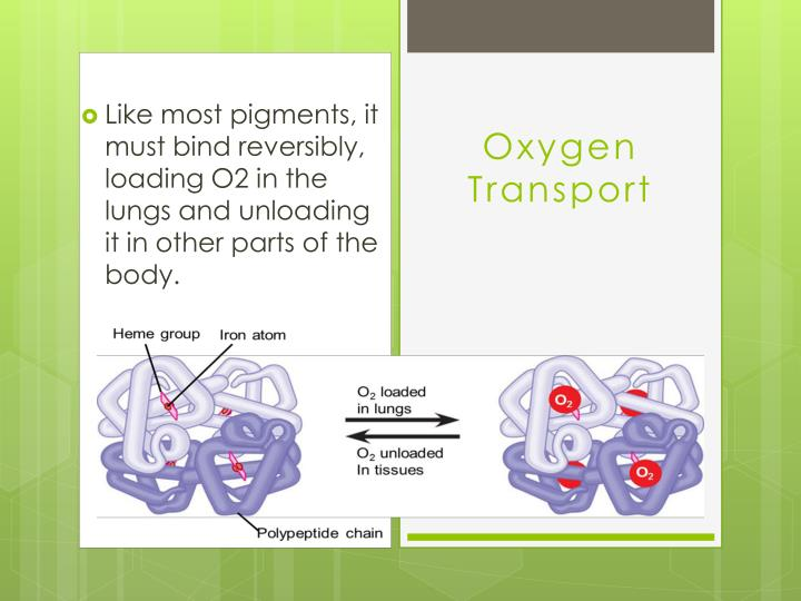 Like most pigments, it must bind reversibly, loading O2 in the lungs and unloading it in other parts of the body.