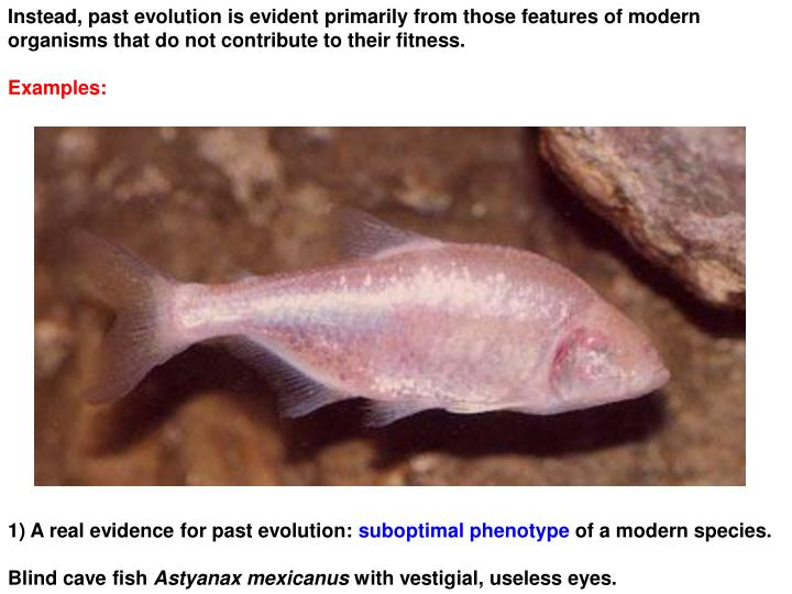 Instead, past evolution is evident primarily from those features of modern  organisms that do not contribute to their fitness.