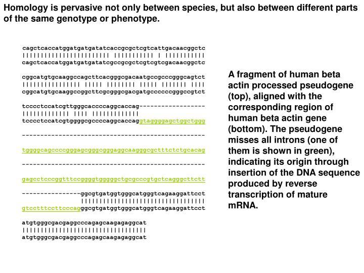 Homology is pervasive not only between species, but also between different parts of the same genotype or phenotype.
