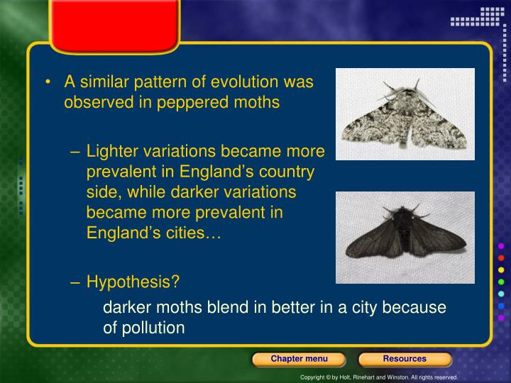 A similar pattern of evolution was observed in peppered moths