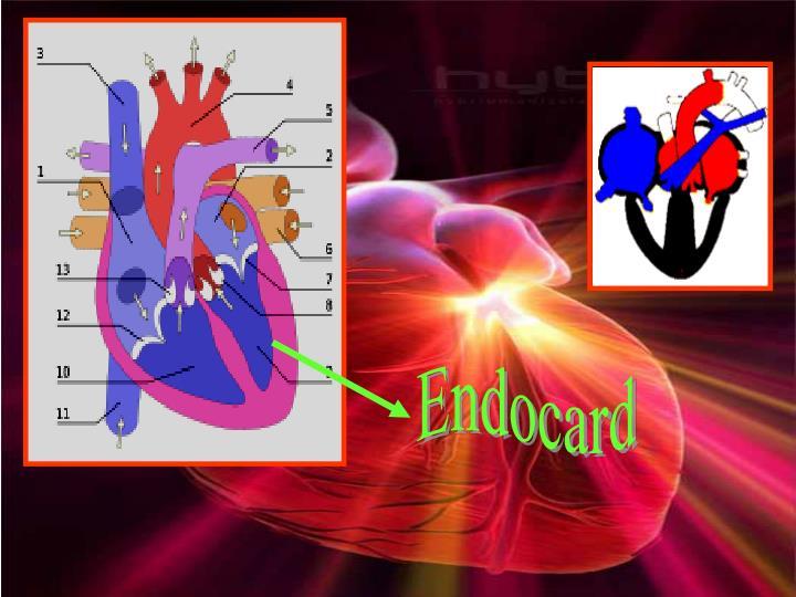 Endocard