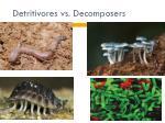 detritivores vs decomposers1