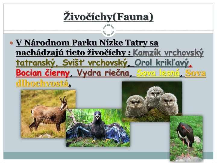 Živočíchy(Fauna)