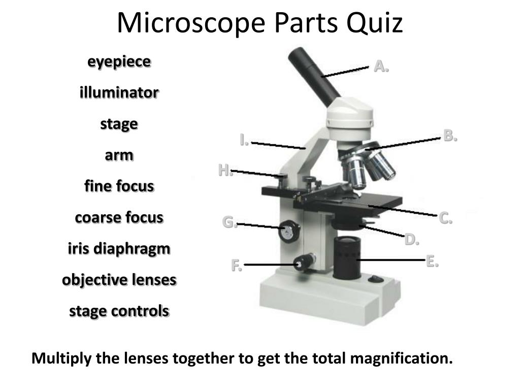 Stage Microscope Definition | Examples and Forms