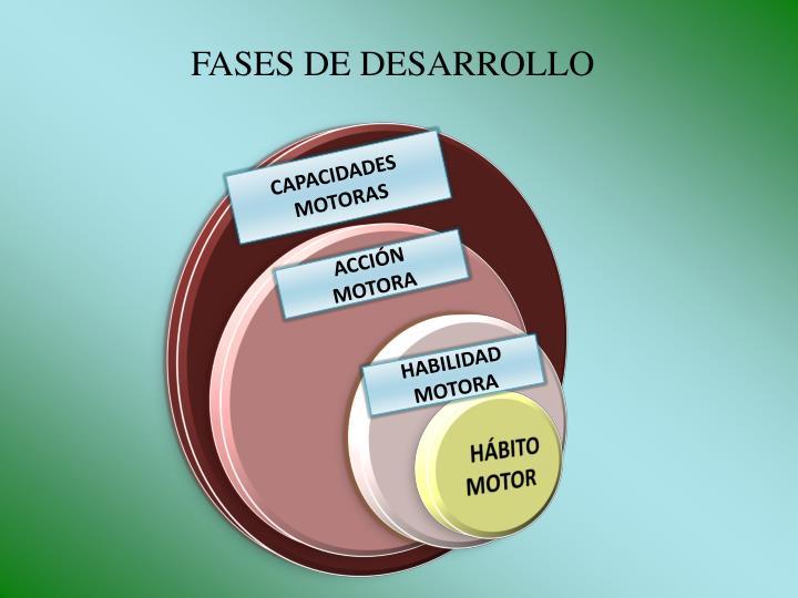 FASES DE DESARROLLO
