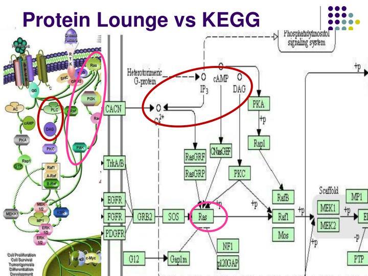 Protein Lounge vs KEGG