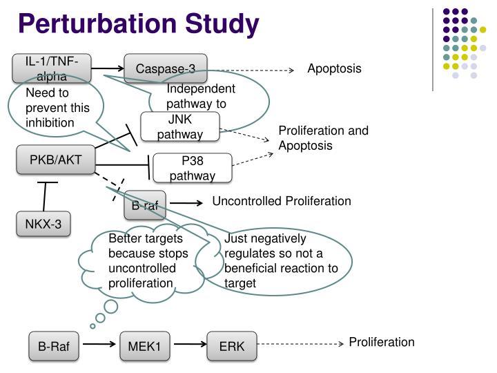 Perturbation Study