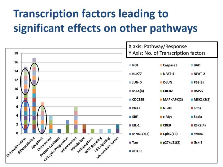Transcription factors leading to significant effects on other pathways