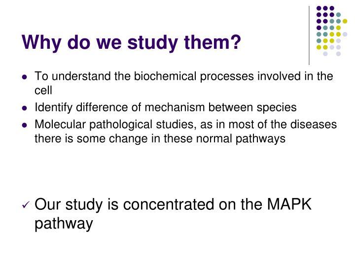 Why do we study them?
