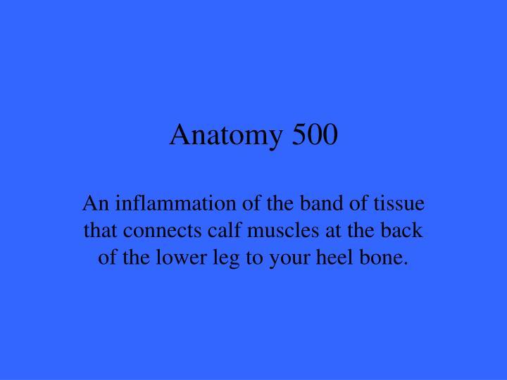 Anatomy 500