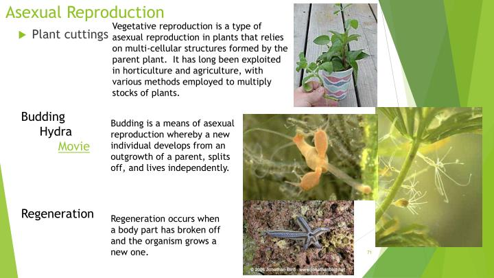 Vegetative reproduction is a type of asexual reproduction in plants that relies on multi-cellular structures formed by the parent plant. It has long been exploited in horticulture and agriculture, with various methods employed to multiply stocks of plants.