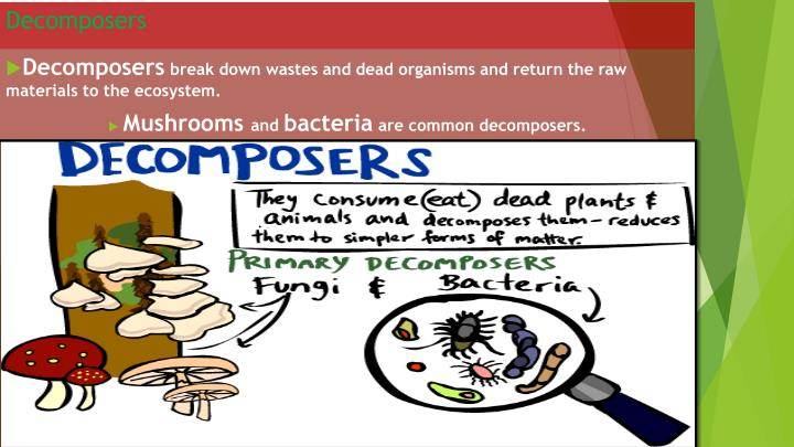 Decomposers