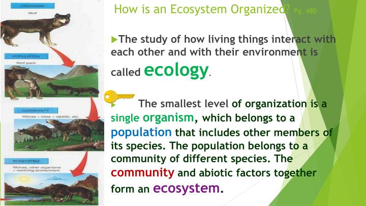 How is an Ecosystem Organized?