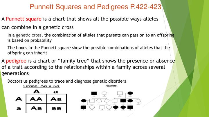 Punnett Squares and Pedigrees P.422-423